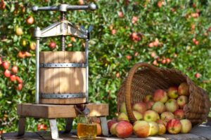 Making apple juice with a juice press