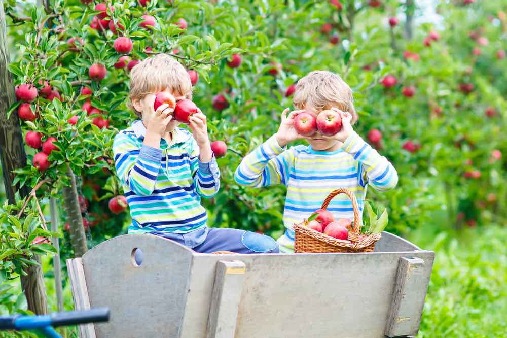 2 Boys With Apples