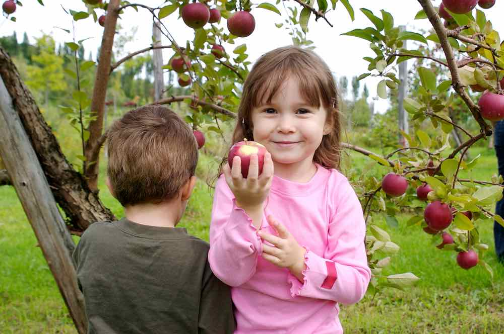 Kids picking apples