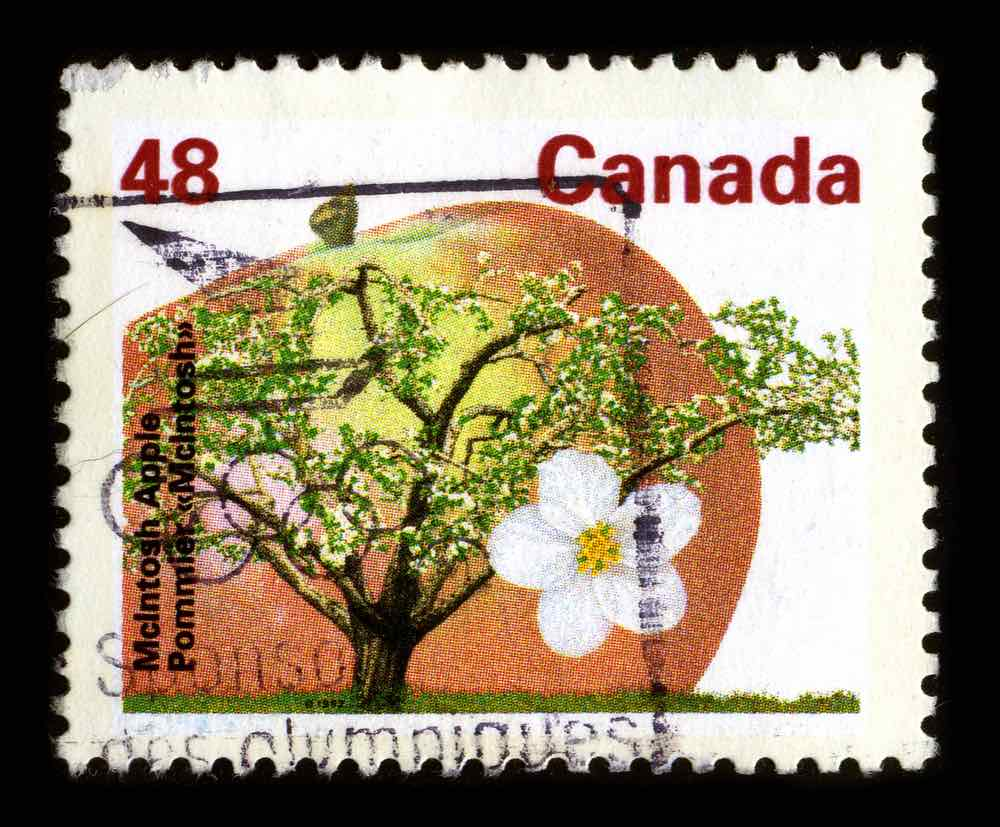 Canadian McIntosh Red Apple Stamp