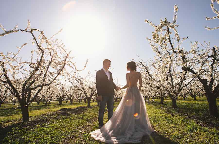 Apple Orchard Wedding Apple Blooms