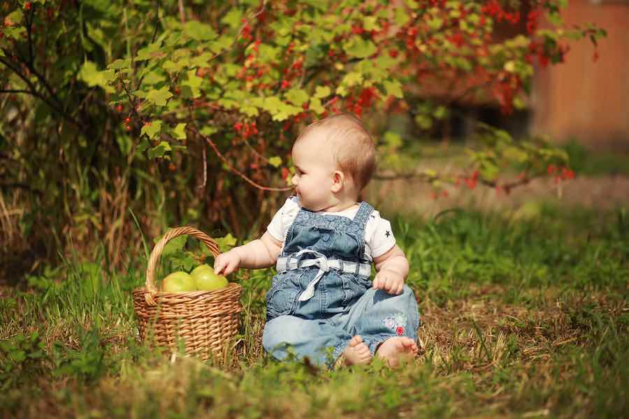 Little girl with a basket of golden delicious apples
