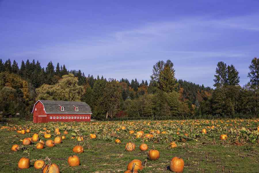 Best Pumpkin Patches in Alabama: Barn and Pumpkins