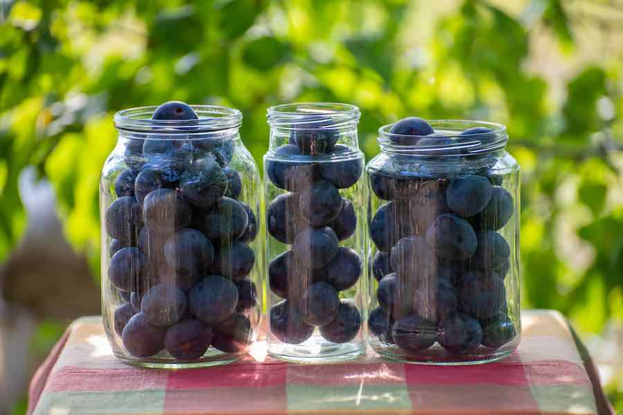 Canning Plums