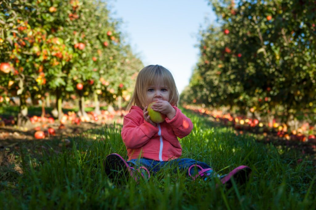 pine tree apple orchard minnesota things to do fall weekend with kids mn