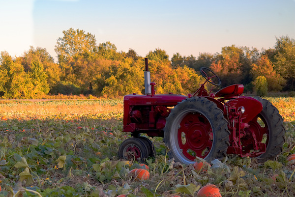 Places to go fall MN 2020 apple pumpkin orchards BEST