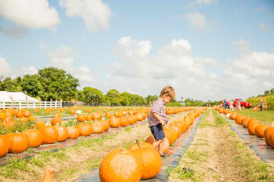Boy Playing in Pumpkin Patch: Best Pumpkin Patches in Florida