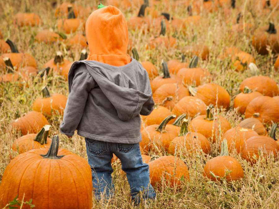 Kid in a Colorado Pumpkin Patch