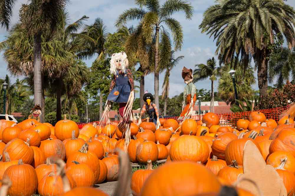 Pumpkin Patch in Florida
