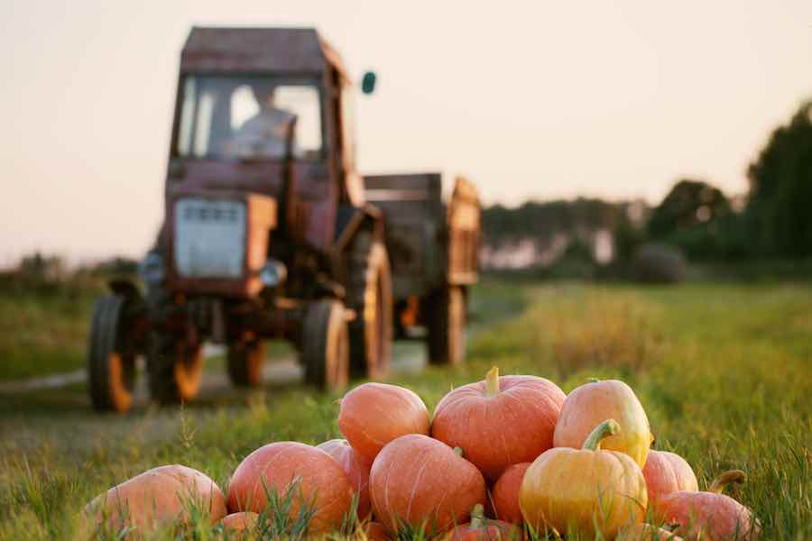 Pumpkin Patches in Delaware: Pumpkins and a Tractor