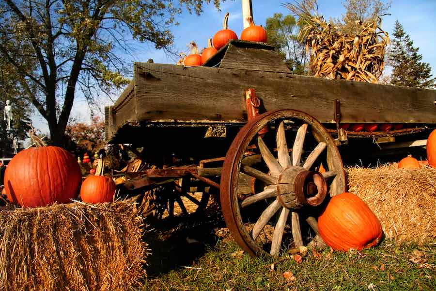 Pumpkin Patches in Delaware: Pumpkins on a wooden wagon