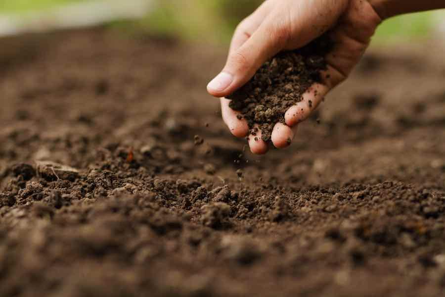 Gardener in the dirt