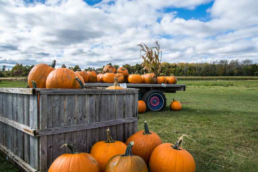 Wisconsin Pumpkin Patch