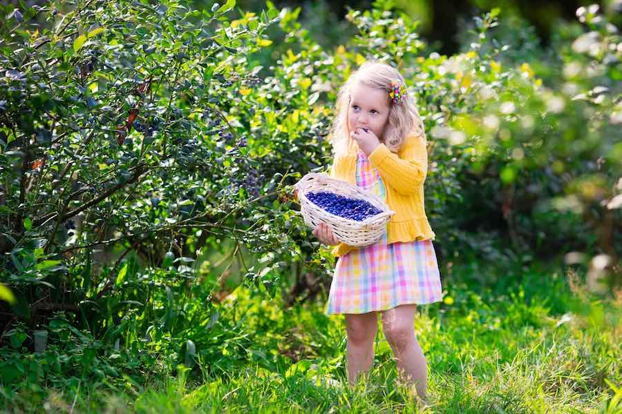 Girl eating blueberries