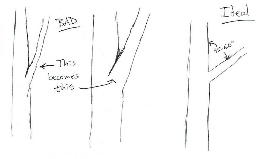 Good vs bad branch Angles
