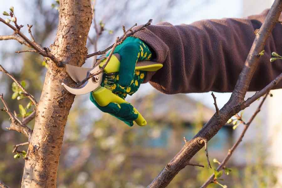 Pruning Plum Trees