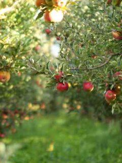 Enterprise Apples on a Tree