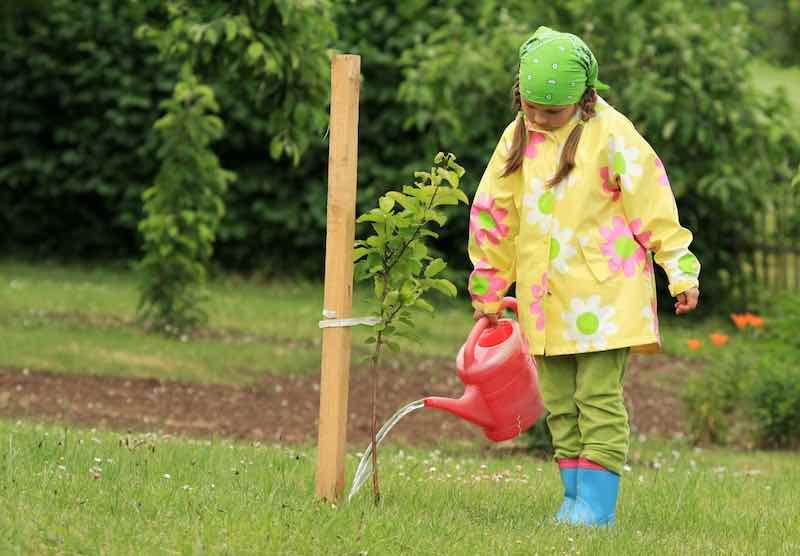 Girl Watering an Apple Tree