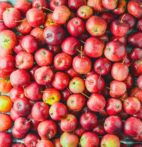 Closeup of small, red Pixie Crunch Apples -- an apple variety found at some of the best apple orchards in Rhode Island.