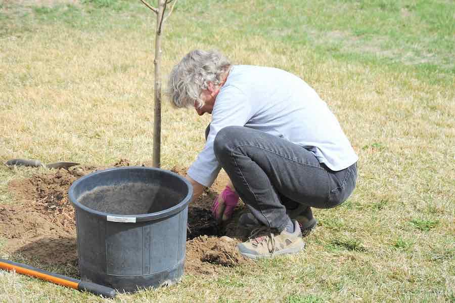 Planting a Plum Tree