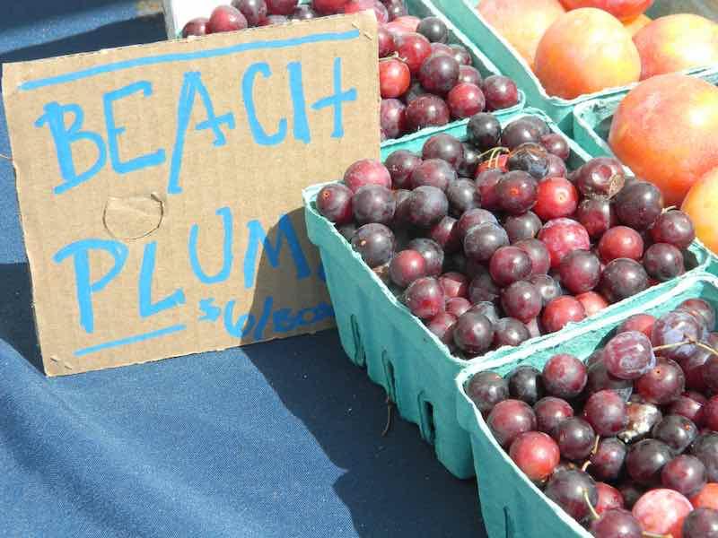 Beach plums for sale.