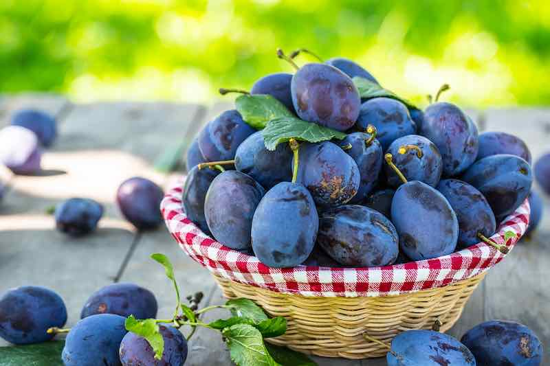 French Plums