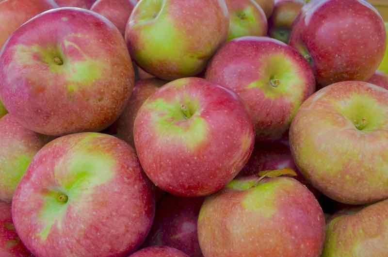 red ripe Macoun apples