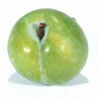Green Kelsey Plum