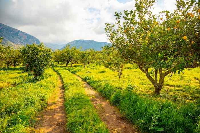 How To Grow Lemon Trees