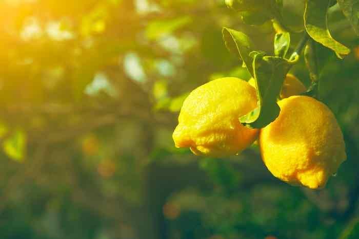 Lemons in the Sun