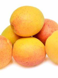 Perfection Apricot