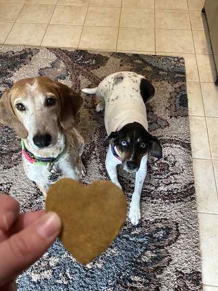 Dogs and homemade dog treats.