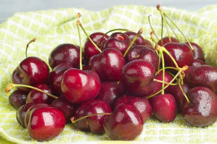 Picked Lapins cherries on a towel.