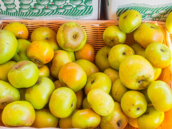 Newtown Pippin Apple
