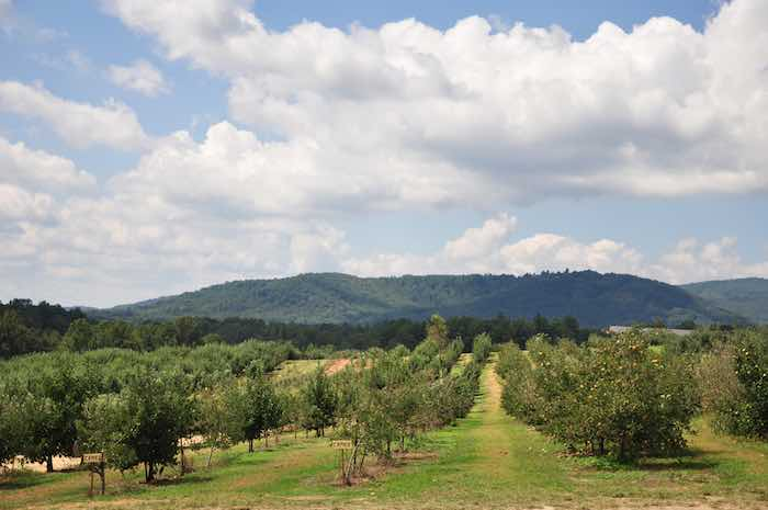 One of the best apple orchards in North Carolina with a beautiful mountain view.