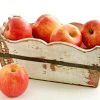 Autumn Glory Apple Tree