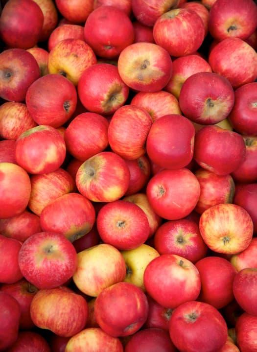 Closeup of picked Gravenstein Apples.