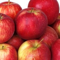 Haralson Apple tree apples