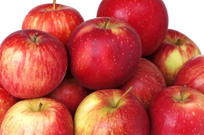 Closeup of reddish yellow Haralson apple tree apples.