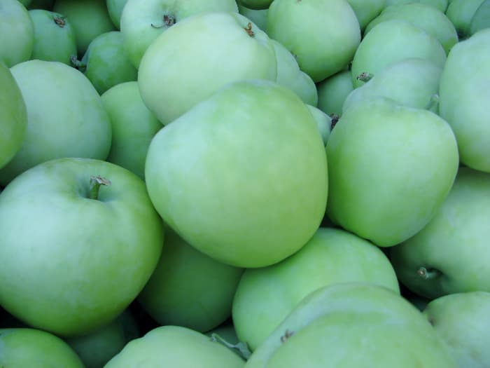 Closeup of yellow green Lodi apples, which are similar to Pristine Apples