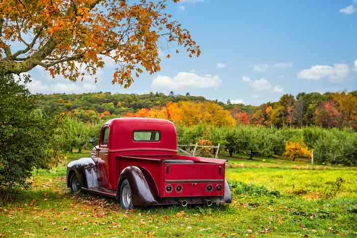 Bowdoin, Maine, Old antique red farm truck in apple orchard.
