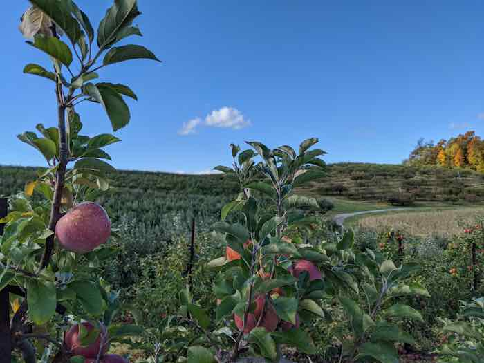 Best apple orchards in Maryland in the beautiful Maryland hillside.