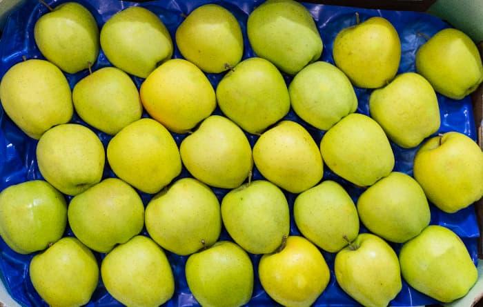 Closeup of yellow green Mutsu apples for sale.