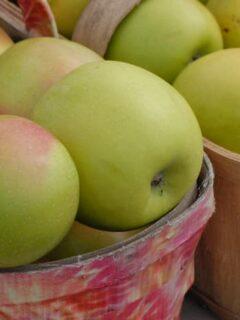 Mutsu Apple tree apples