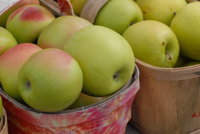 Closeup of greenish red apples in baskets from Mutsu Apple trees