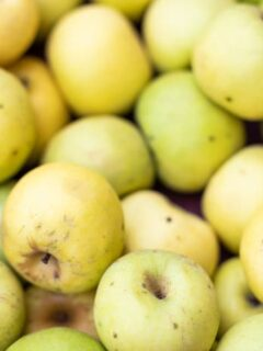 Picked golden apples that closely resemble Grimes Golden Apple Tree apples.