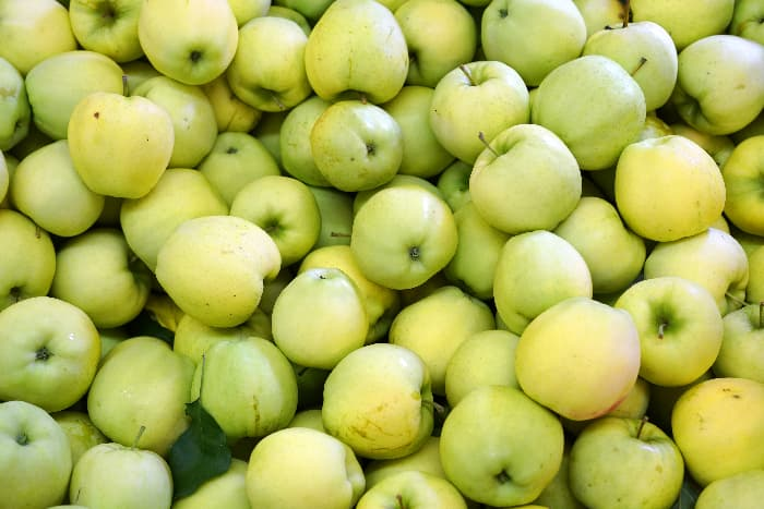 Harvested Ginger Gold Apples.
