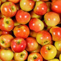 Kanzi Apple tree apples
