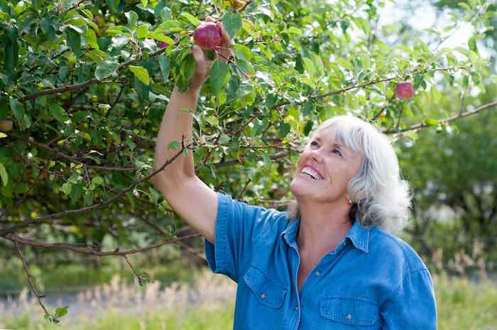 Picking apples at a beautiful orchard in Colorado.