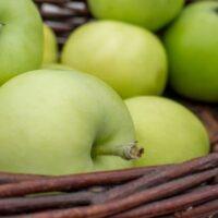 White Transparent Apple tree apples.